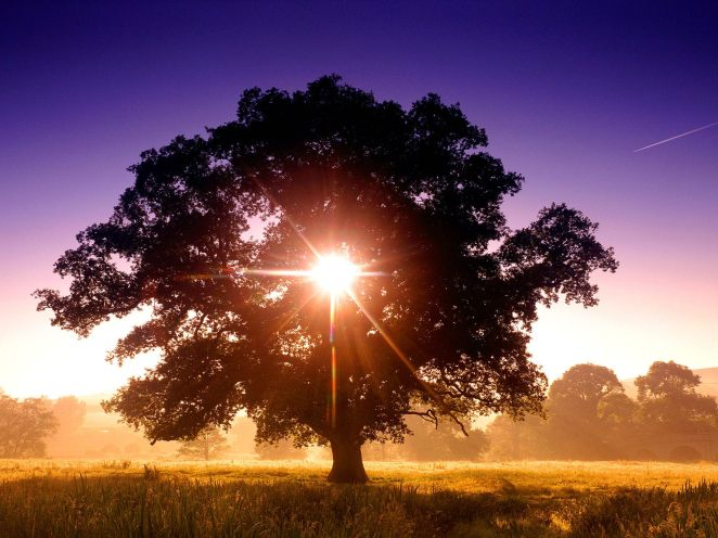 Tree of Life, North Devon, England[1]